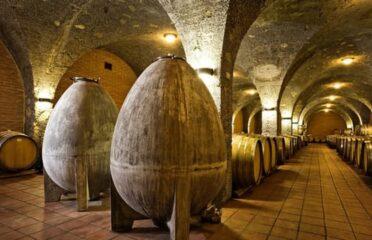 Brunello di Montalcino degustazione privata e pranzo nella tenuta biologica Corte Pavone