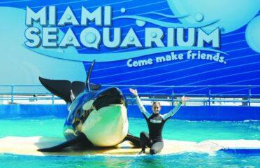 Biglietti d'ingresso per Miami Seaquarium con trasporto