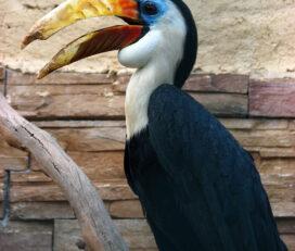 Parco Zoologico Attica