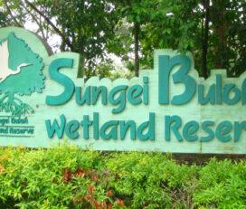 Riserva Sungei Buloh Wetland
